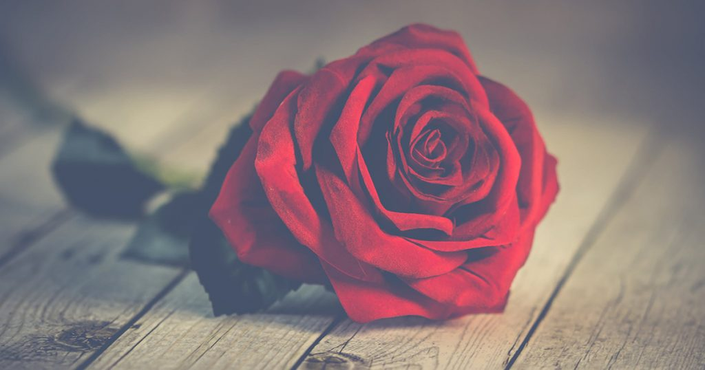 image of valentine's day roses